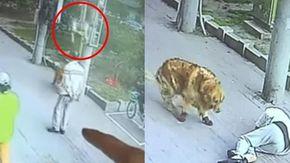 Un gatto cade in testa a un uomo, che viene soccorso da un cane con le scarpe