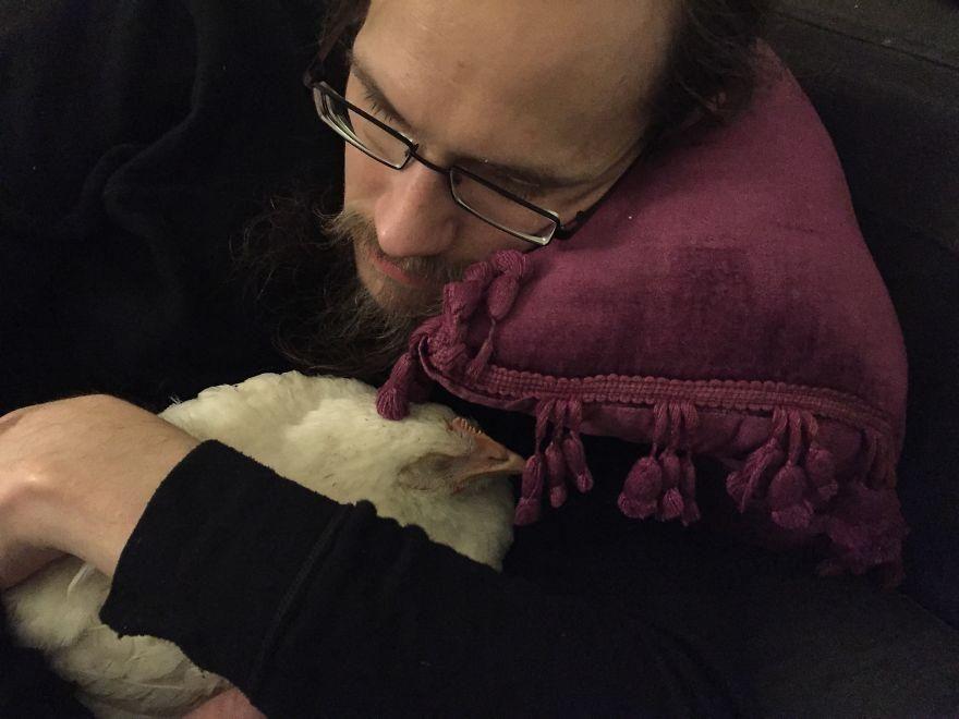 La fuga di Victoria, la gallina scappata da un allevamento ha trovato l'amore in una nuova casa