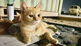 Los soldados adoptan una familia de gatos en Oriente Medio: un concurso solidario para ayudarlos