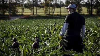 Braccia sfruttate all'agricoltura: così il caporalato controlla la filiera alimentare