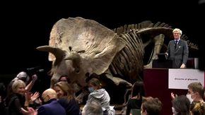 Big John battuto all'asta: il triceratopo più grande del mondo venduto per 5,5 milioni di euro