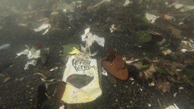 Il Santuario dei Cetacei è invaso dalla plastica: chi inquina la fa franca e le istituzioni dormono