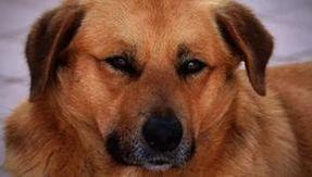 O dono morreu há dois anos, mas seu cachorro Jerry espera por ele todos os dias na frente da casa