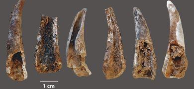 I pasti dei Neanderthal..