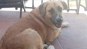 Giotto, il cane del distretto di Massafra, avvelenato e ucciso: