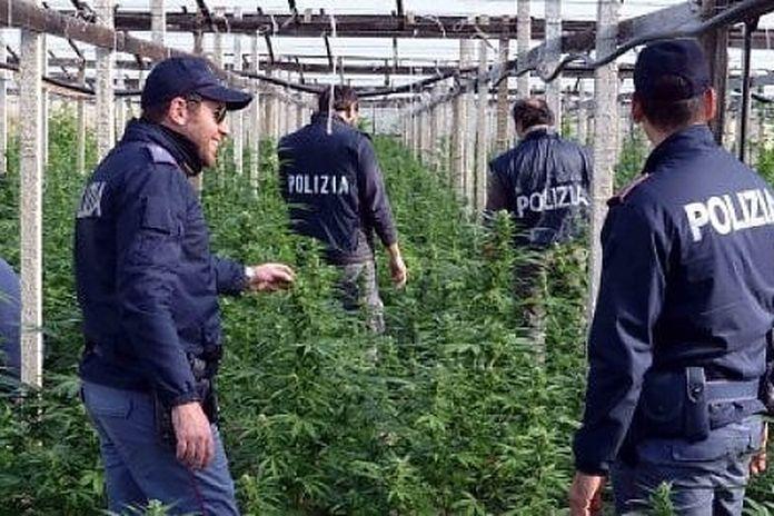 Ragusa, drone scopre una serra di cannabis tra i pomodorini