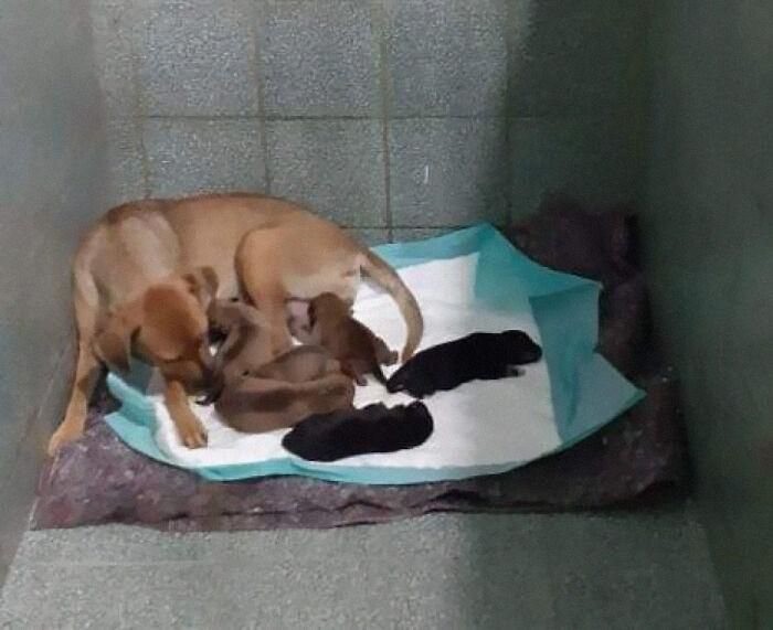 Un perro espera fuera de una clínica veterinaria mientras una madre da a luz a su cría