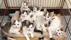 Due gatte che hanno cresciuto insieme 8 gatti aspettano tutti i giorni davanti alla porta di un rifugio per essere adottate