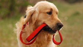 Va dall'amante con il cane, ma grazie al quattrozampe la moglie scopre il tradimento e li caccia entrambi da casa