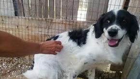 The sad story of Gordon, an abused hunting dog still trembles almost two years after being rescued