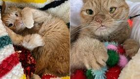 Here is Toast, the cat born with a single nostril and an extra chromosome