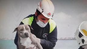 Incastrato tra gli scogli del vecchio faro, cane salvato a Fiumicino