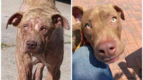 L'incredibile trasformazione di Charlie, il cane con la zampa paralizzata sopravvissuto in mezzo all'indifferenza