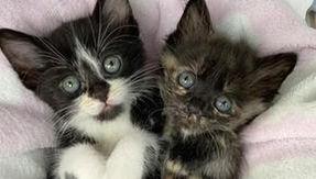 El maullido del gato atrae la atención del hombre y su vida cambia con la vida de sus hermanos