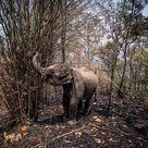 """Thailandia, coronavirus. Gli """"elefanti del turismo"""" a rischio"""