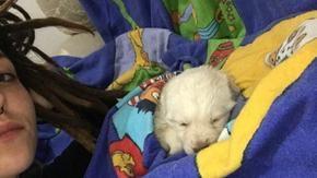 """""""Ha aperto gli occhi"""", cresce la speranza per il cucciolo di cane gettato da un'auto in corsa nell'Agrigentino"""