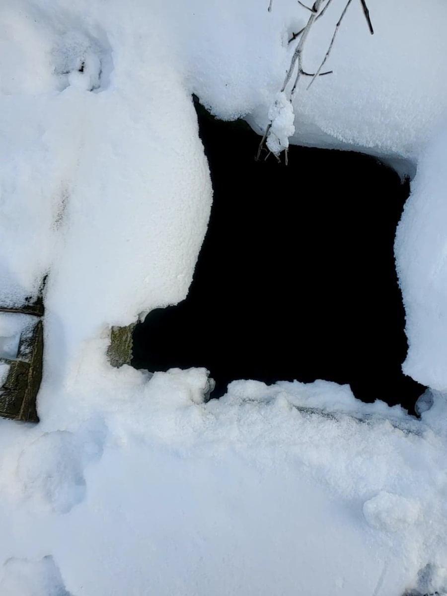 Cane manca da casa da 43 giorni: ritrovato vivo in un pozzo profondo tre metri