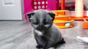 O gato nascido com pelo sobreviveu