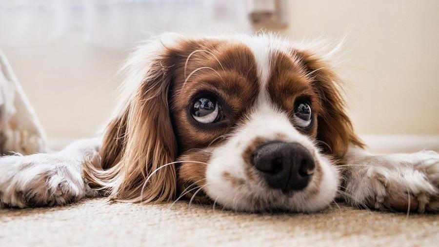 """Un nuovo Ddl propone l'accesso degli animali in chiese e ristoranti, i firmatari: sono """"esseri senzienti"""""""