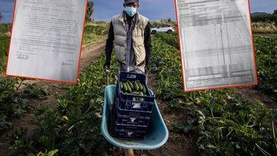 Il mercato nero dei contratti e degli indirizzi falsi creato dalla sanatoria migranti