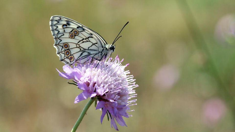 Alla Scoperta Delle Farfalle 22 Curiosità Sul Loro Mondo