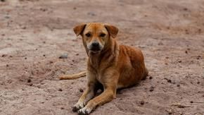 In Greece, those who abuse animals face up to 10 years in prison