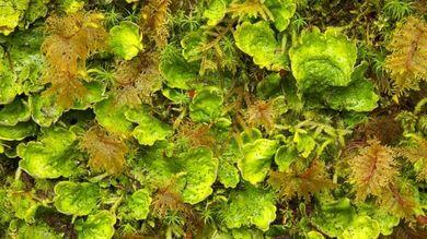 Cosa sapete sui licheni?