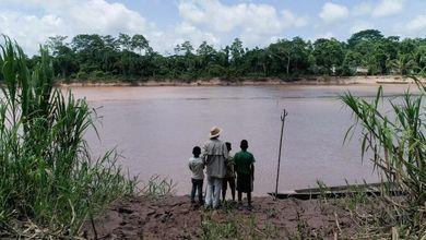 Milioni di ettari di foreste tropicali spariti per le importazioni dell'Unione europea: l'allarme del WWF