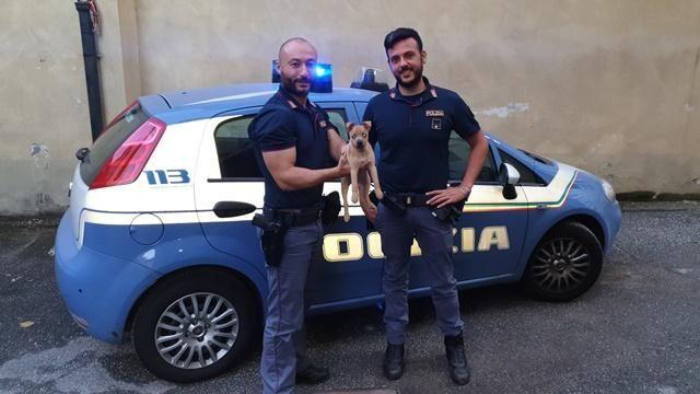 Cucciolo di cane salvato dai poliziotti diventa la mascotte del Commissariato Barriera Nizza