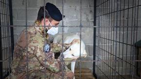 L'esercito italiano difende i cani randagi in Kosovo