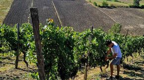 Tour in sei aziende delle Terre Derthona: dall'opera in vigna alla vinificazione