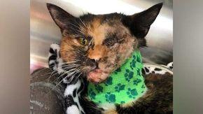 Il miracolo di Trudie, il gatto sopravvissuto allo scontro con un autobus