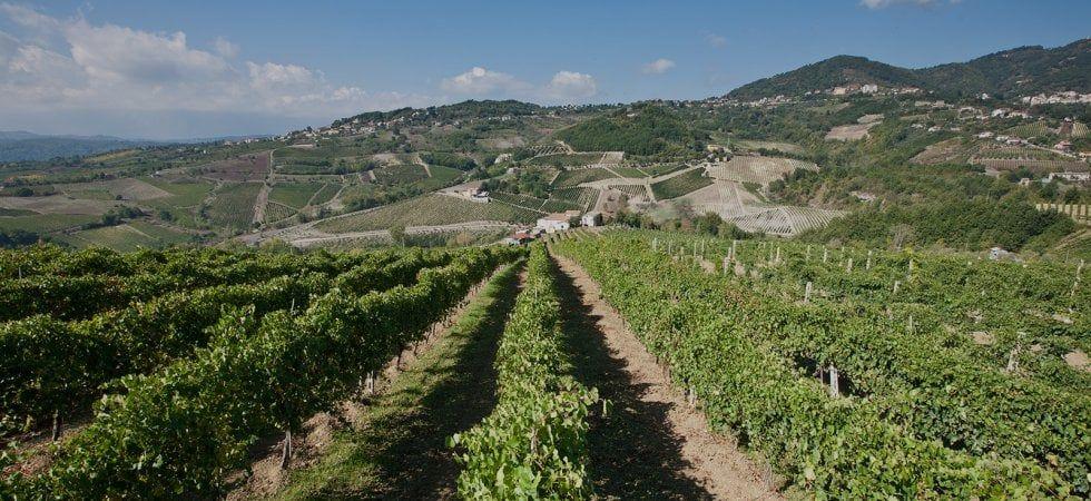Taurasi DOCG: dieci vini di estrema qualità e longevità da assaggiare - la  Repubblica