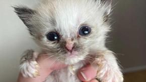 During the farewell to his 20-year-old cat, he finds and rescues a 120-gram kitten