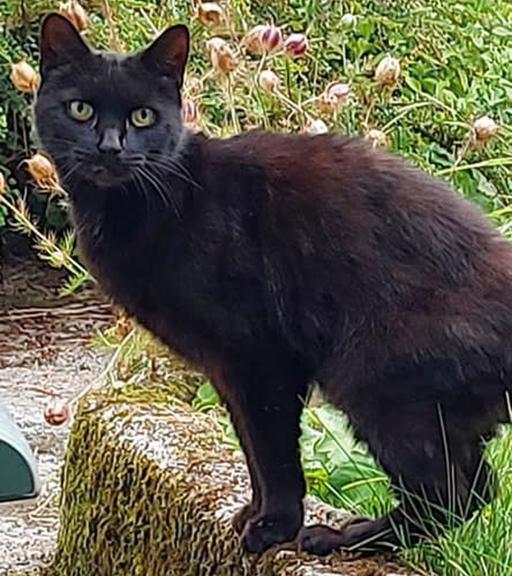 Il gatto eroe Piran salva l'anziana proprietaria caduta per 21 metri in un burrone: il suo miagolio ha guidato i soccorsi