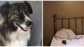 Il cane sveglia la proprietaria pochi istanti prima che una meteorite si schianti sul suo letto