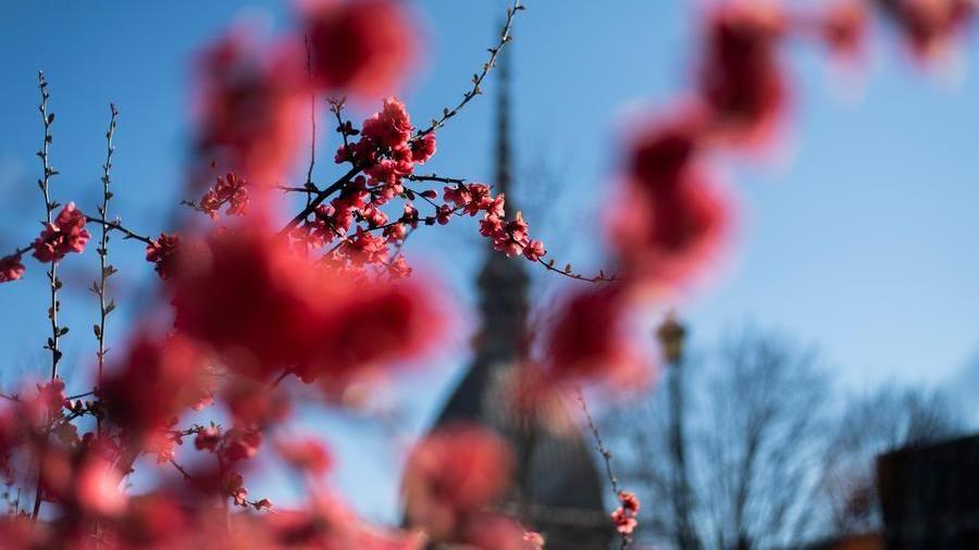 Giornata mondiale della terra, piantati tremila alberi a Torino