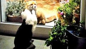 Il gatto e la volpe, l'amicizia da fiaba durante la quarantena per il coronavirus
