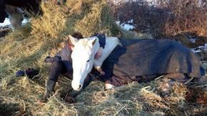 L'appello per salvare quei 170 cavalli che adesso rischiano di morire
