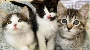 A family adopts three cats who did not want to separate