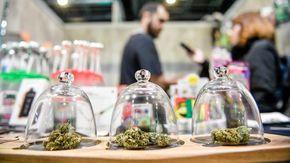 Referendum Cannabis, raggiunte le 500mila firme: al voto entro la primavera del 2022