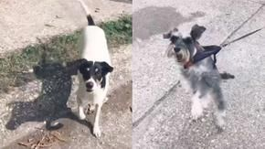 A dog runs away from home to visit his