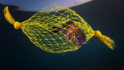 """La """"caramella gialla"""" è una trappola per pesci: premiata la foto di Pasquale Vassallo"""