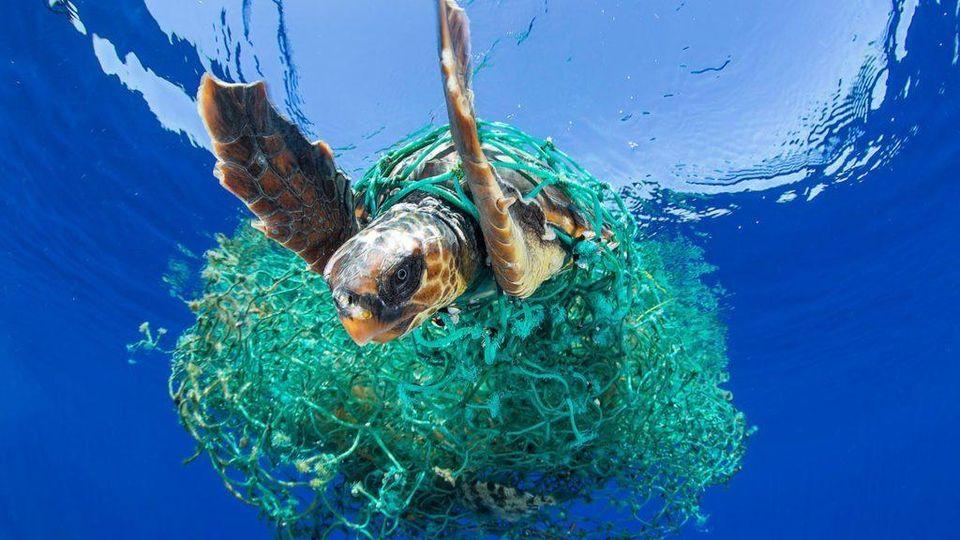 Plastica killer per le tartarughe marine - La Stampa - Ultime ...