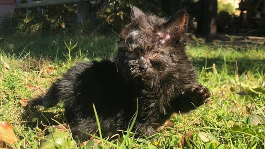 La storia di Duo, il gatto nato con un corpo e due facce che ...