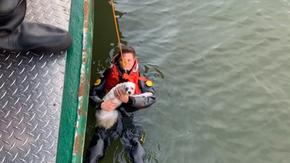 Si tuffa nel fiume per salvare il suo cane in difficoltà, salvati entrambi dalla polizia