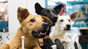Coronavirus, the United States and Europe there is a boom of adoptions of dogs. But it is always a good news?