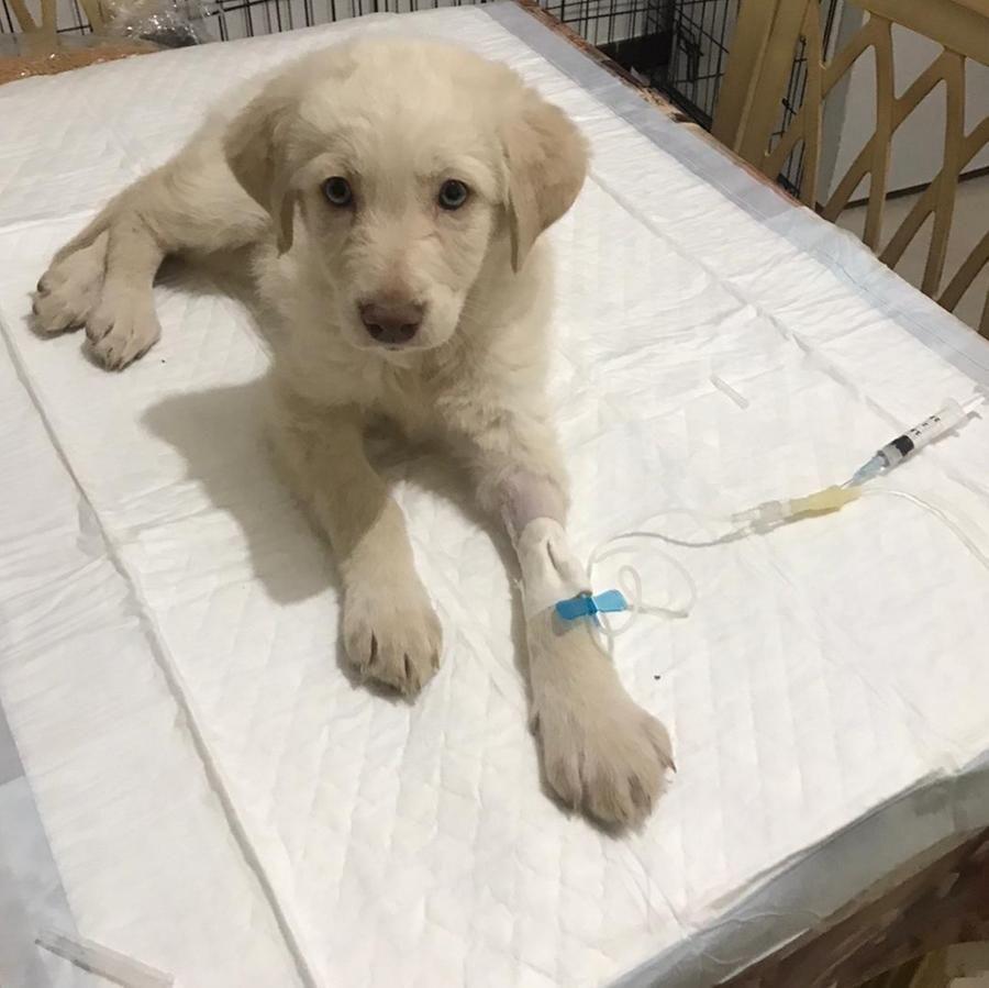 """""""Hola non sta bene"""", preoccupa la salute del cane salvato dopo essere stato lanciato da un'auto in corsa"""