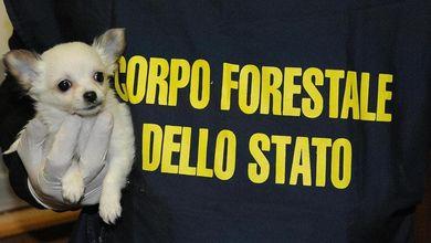 Gli ambientalisti contro il governo Renzi<br />