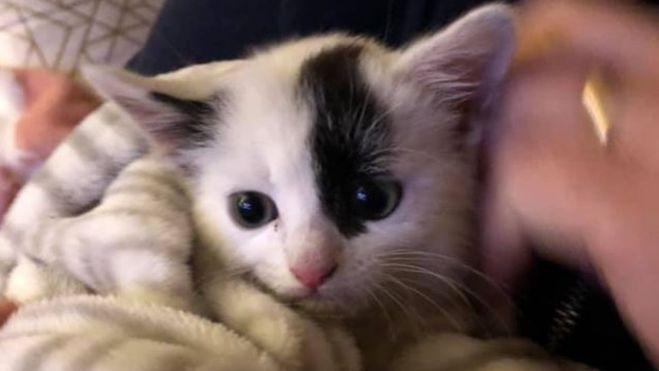 Smontano mezza auto per salvare la vita a un gatto